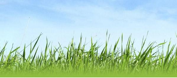 skygrass